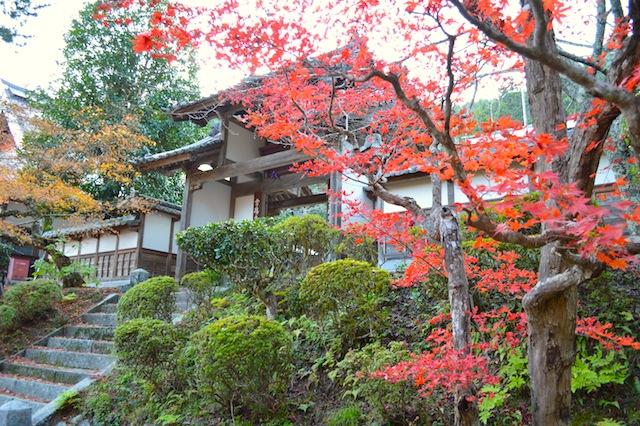 龍隠寺の紅葉